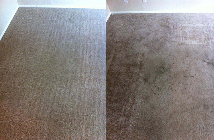 Residential carpet cleaning in AZ
