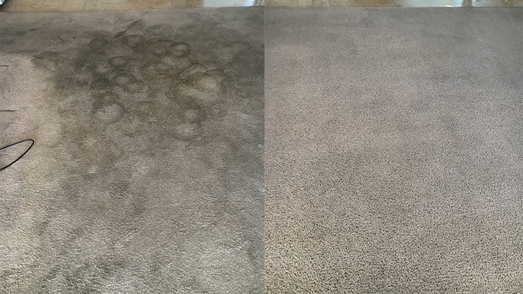 carpet cleaning your carpet will be like new